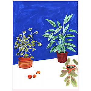 Plants and mandarines