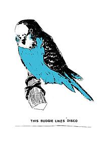 This Budgie like disco